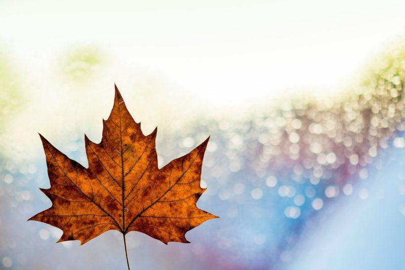 پیکاپ ویزای کانادا | پیکاپ پاسپورت کانادا
