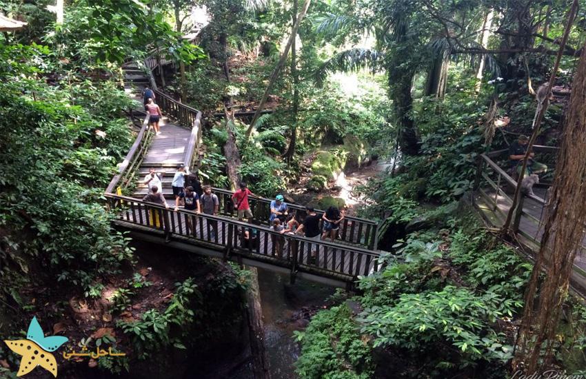 جنگل میمون