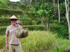 مزارع پلکانی برنج بالی