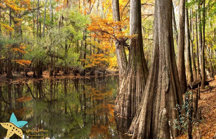 پارک ملی کانگری - جاذبههای ایالات متحده