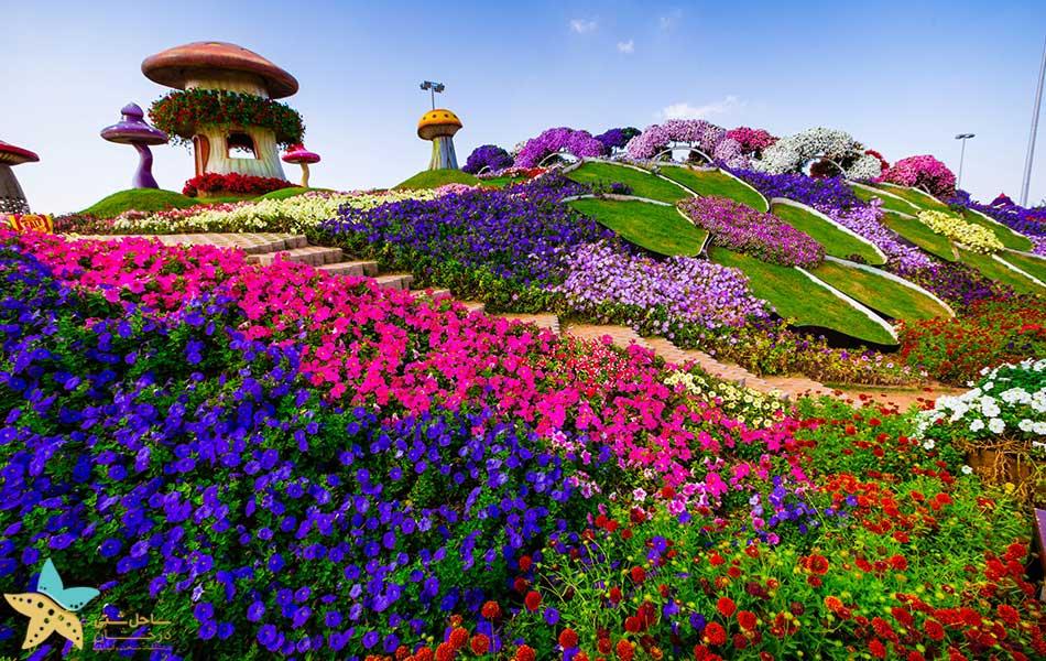 باغ گل معجزه دبی