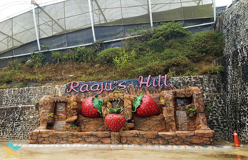 مزرعهی توتفرنگی Raaju