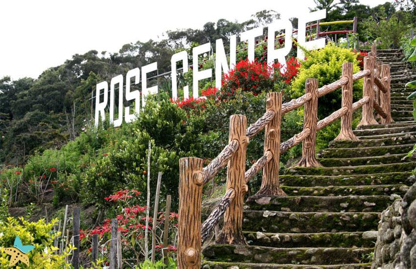 باغ رز ارتفاعات کامرون