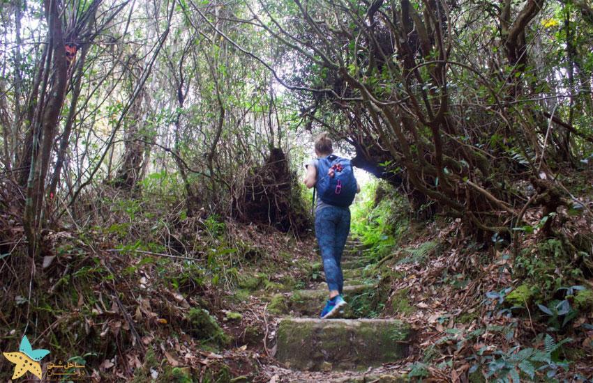 cameron highlands jungle trekking