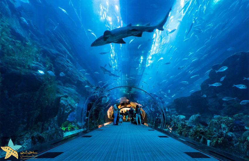 dubai aquarium \ جاهای دیدنی دبی