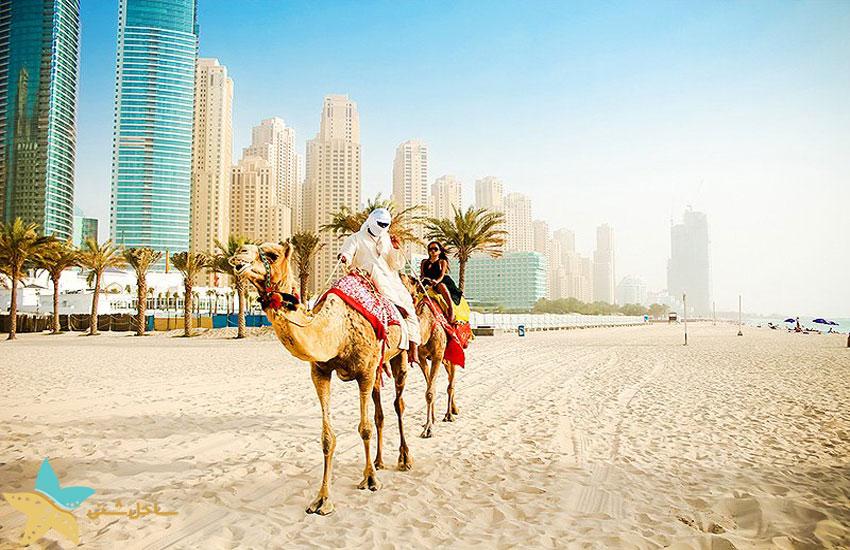 dubai marina camel ride
