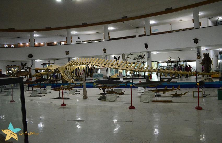 موزهی تاریخ طبیعی و تکنولوژی