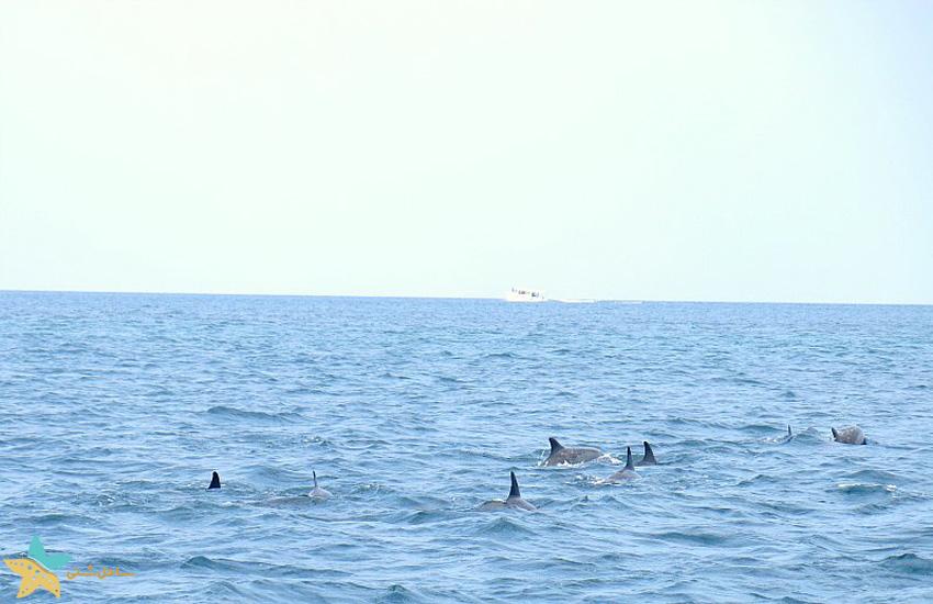 Maafushi Island