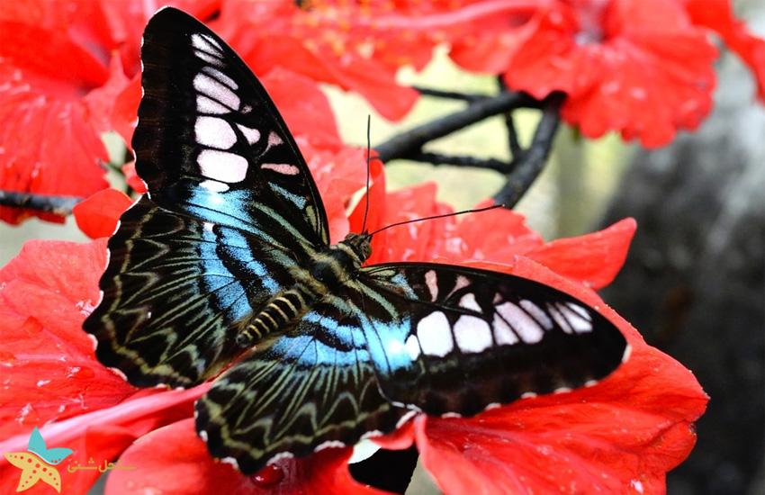 باغ پروانه   تور کوالالامپور پنانگ