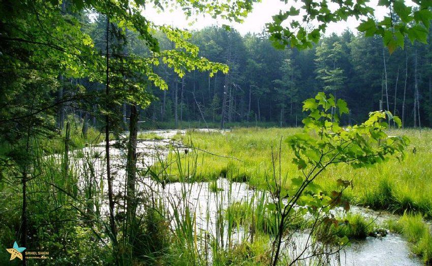 جنگل پیتر کانادا