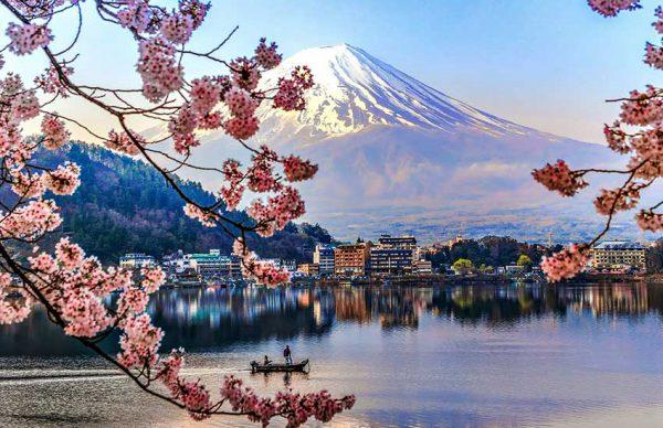 همه چیز درباره فصل شکوفههای گیلاس در ژاپن