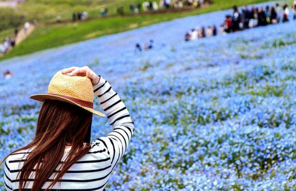 پارک هیتاچی سیساید، جواهری رنگارنگ در ژاپن