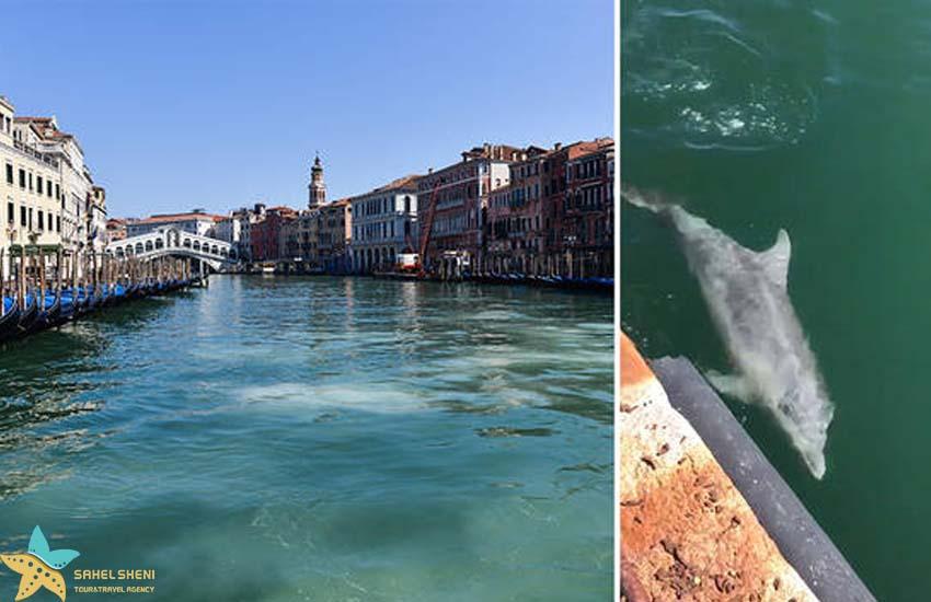 عکس دلفین در ونیز
